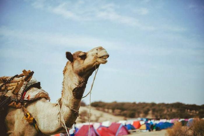 超成長市場で学ぶインド留学!格安で行けるインド留学のススメ
